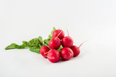 Small garden radish Stock Images