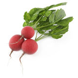 Small garden radish  Royalty Free Stock Photos
