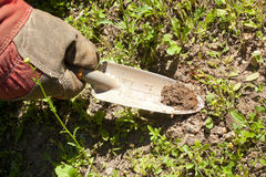 Small Garden Trowel. A gloved hand holding a small garden trowel Stock Photography