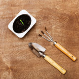 Small Gardening Tools and Little Green Sprout Stock Image
