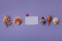 Small gift card composed with marine things Royalty Free Stock Photography