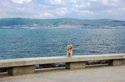A small ginger dog sitting on the background of the sea . Stock Photography
