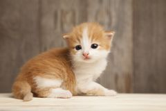 Small ginger kitten on background of old wooden boards.  Royalty Free Stock Photography