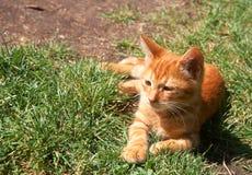 Small ginger kitten lying on grass Stock Images