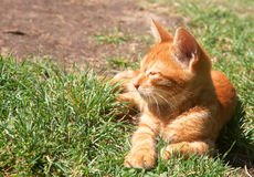 Small ginger kitten sleeping on grass Royalty Free Stock Images