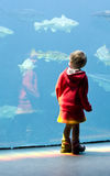 Small girl at aquarium. Small girl (3 years old) looking at fishes in a large saltwater aquarium Royalty Free Stock Photo