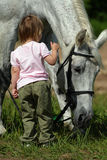 Small girl and big grey horse. Little girl make an attempt to establish communication with big grey horse. She offer hand to it's neck and fear to touch it royalty free stock images