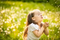 Small girl blowing dandelion. Happy small girl blowing dandelion flower outdoors. Girl having fun in spring park. Blurred background in sunset Royalty Free Stock Photography