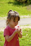 Small girl child blows a dandelion. Royalty Free Stock Images