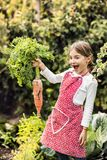 A small girl harvesting vegetables on allotment, holding a big carrot. A small girl harvesting vegetables on allotment. Girl gardening, holding big carrot royalty free stock image