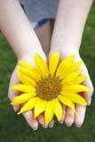 Small girl holds beautiful sunflower Stock Photos