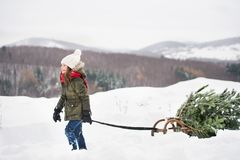 A small girl pulling a Christmas tree in forest. A small girl getting a Christmas tree in forest. A girl pulling a tree on a sledge. Winter day Stock Image