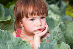 Small girl sitting in the cabbiges royalty free stock images