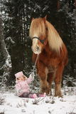 Small girl sitting in the snow and big palomino horse standing n Stock Photography