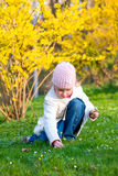 Small girl in spring park. Happy small girl gather gowan flowers near blossoming yellow Forsythia bush Stock Images