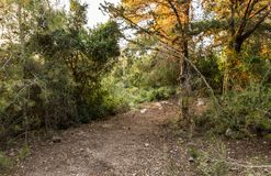 A small  glade in the Hanita forest in northern Israel, in the rays of the setting sun. A small glade in the Hanita forest in northern Israel, in the rays of the stock image