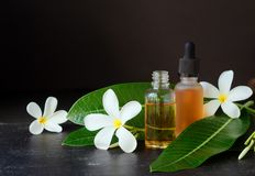 Small glass jars with oil and Frangipani Plumeria patchouli flowers for spa treatments black background, selective focus. Small glass jars with oil and stock image
