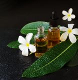 Small glass jars with oil and Frangipani Plumeria patchouli flowers for spa treatments black background, selective focus stock photos