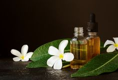 Small glass jars with oil and Frangipani Plumeria patchouli flowers for spa treatments black background, selective focus. Small glass jars with oil and royalty free stock images