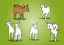 Small goats Stock Photography