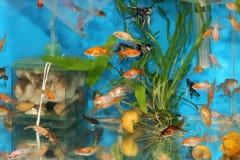 Inside fish tank Stock Photo