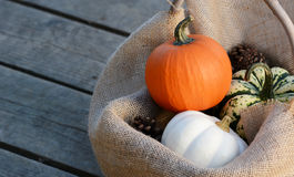 Small gourds nestled in hessian on wide wooden planks Royalty Free Stock Image