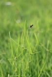 Small grass Stock Photo