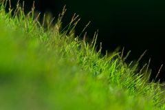 Small grass field Stock Photography