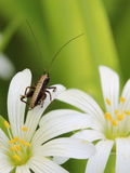 small grasshopper on flower  Stock Photo