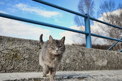 Small gray brown cat on the sidewalk on the road, lonely cute little kitten playing in the street Royalty Free Stock Photography