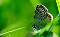 Small gray butterfly in the grass. Gray little butterfly in the grass,nIn the green grass in the sun Royalty Free Stock Photography