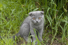 Small gray cat. Playing in the garden Stock Photos