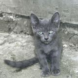 Small gray cat outdoors Royalty Free Stock Image
