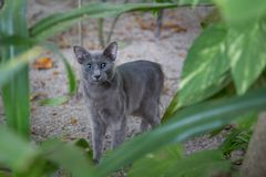 Small gray cat between the plants Stock Photo