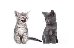 Small gray cats Stock Photos