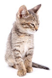 Small gray kitten blinked isolated on white background Stock Photo