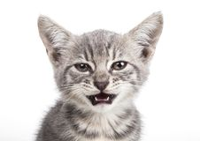 Small gray kitten Royalty Free Stock Images