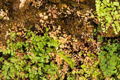 Small Green and Brown Leaves on Perfect Soil Ground Background.  royalty free stock photos