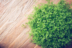 Small green bush decorated interior on brown wooden table Royalty Free Stock Photography