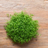 Small green bush decorated interior on brown wooden table Royalty Free Stock Images