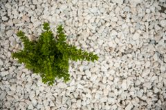 Small green bush on the white stones. Photo tooken up to down, abstract, art, autumn, background, beautiful, closeup, color, decoration, design, detail, farm stock photos