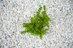 Small green bush on the white stones. Photo tooken up to down, abstract, art, autumn, background, beautiful, closeup, color, decoration, design, detail, farm royalty free stock photo