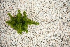 Small green bush on the white stones. Photo tooken up to down stock photo