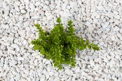 Small green bush on the white stones. Photo tooken up to down royalty free stock images