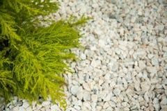 Small green bush on the white stones. Photo tooken up to down stock photos