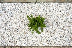 Small green bush on the white stones. Photo tooken up to down royalty free stock photos