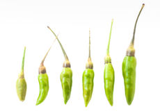 Small Green Chilis isolated on white background Royalty Free Stock Images