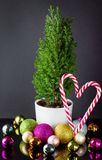 Small green cypress in the cup with christmas balls and candy ca. Small green cypress in the cup and christmas balls and candy cane Stock Photo