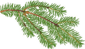 Small green fir branch  illustration. Illustration with fir branch  on white background Royalty Free Stock Image