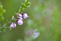 Small green flower detail stock photos